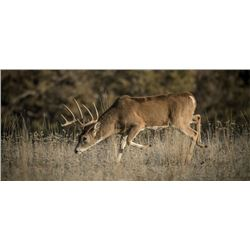 One whitetail buck and doe hunt with Kevin Balzer