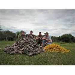 SYC Sporting Adventures, 4 day dove hunt for 6 hunters