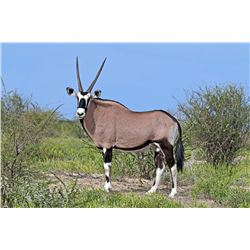 Ubathi Global Safaris, 4 speceis, 1 hunter in Limpopo