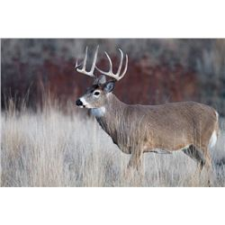 L&L Adventures: Whitetail & Exotic hunt in Wimberley Texas.
