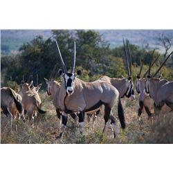 Janie Otto Safaris, Plains game hunt.