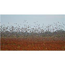 Parana Sunrise Dove hunting and Dorado Fishing