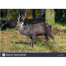 Glacial Valley Hunting, Ireland Deer hunting