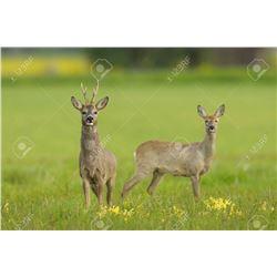 International Adventures donates Roe Deer hunt In Scottland