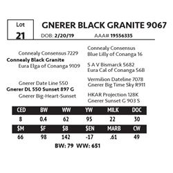 GNERER BLACK GRANITE 9067