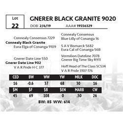 GNERER BLACK GRANITE 9020