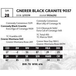 GNERER BLACK GRANITE 9037