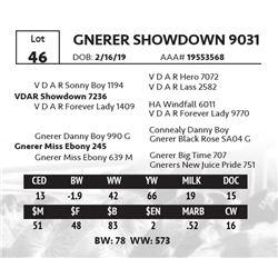 GNERER SHOWDOWN 9031