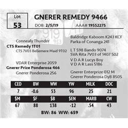 GNERER REMEDY 9466