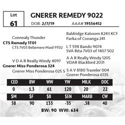 GNERER REMEDY 9022