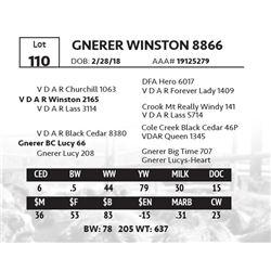 GNERER WINSTON 8866