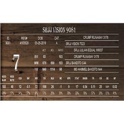 SRJJ VISION 9081