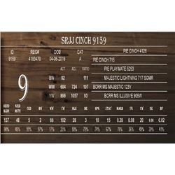 SRJJ CINCH 9159
