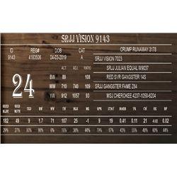 SRJJ VISION 9143