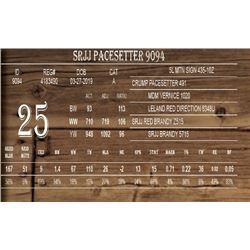 SRJJ PACESETTER 9094