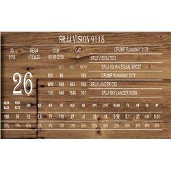 SRJJ VISION 9118