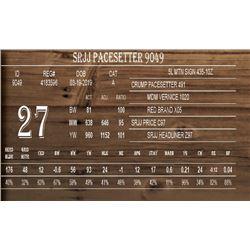 SRJJ PACESETTER 9049