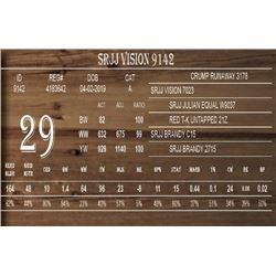 SRJJ VISION 9142