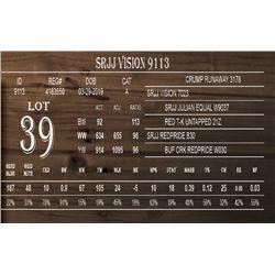 SRJJ VISION 9113