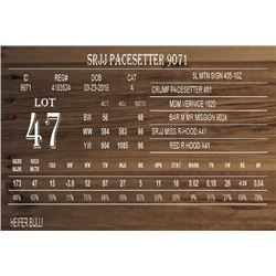 SRJJ PACESETTER 9071