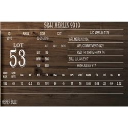 SRJJ MERLIN 9010