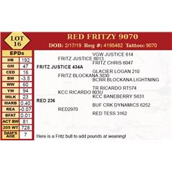 RED FRITZY 9070