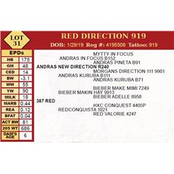 RED DIRECTION 919