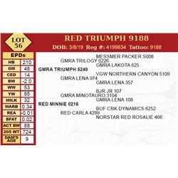 RED TRIUMPH 9188