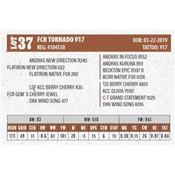 Lot - 37 - FCR TORNADO 917
