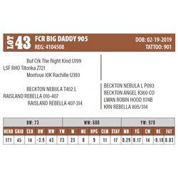 Lot - 43 - FCR BIG DADDY 905