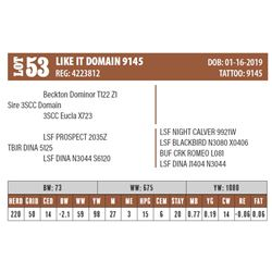 Lot - 53 - LIKE IT DOMAIN 9145