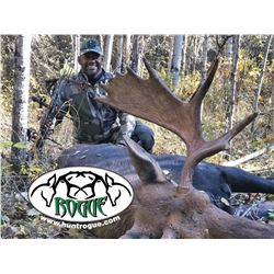 8 Day Alberta 1 Moose/ 1 Wolf Hunt for 1 with Rogue Outfitters