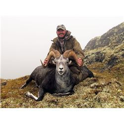 14 Day British Columbia Stone Sheep Hunt for 1 with Kinaskan Lake Outfitters (KLO)