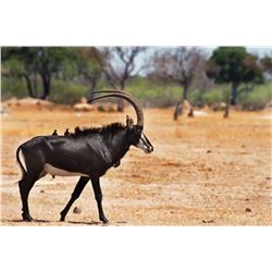6 Day Sable Hunt Package in South Africa from Bayete Group