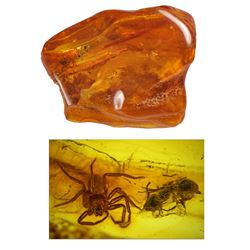 Baltic amber with preserved spider and ant, approx. 44 million years old, from Kaliningrad, Russia.