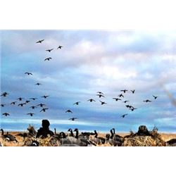 3 Day Duck and Goose hunt for 6 hunters in Alberta