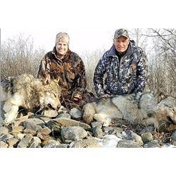Alberta Wolf / Coyote Hunt
