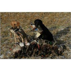 Saskatchewan Duck & Goose Hunt