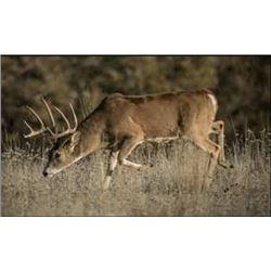 Nebraska Early Whitetail Archery Hunt