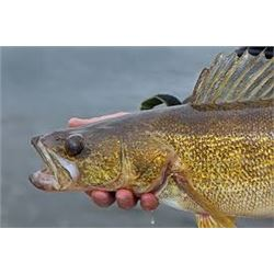 Lake St. Clair or Detroit River Fishing Charter