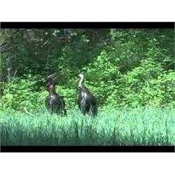 Illinois Spring Turkey Hunt