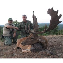 Fallow Deer Hunt in Serbia