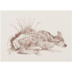 Bob Kuhn - Deer Fawn