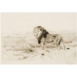 Wilhelm Kuhnert - Lion