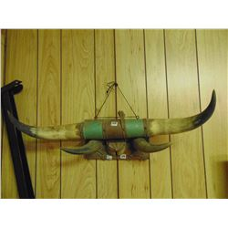 """27"""" horns and hoofs display"""