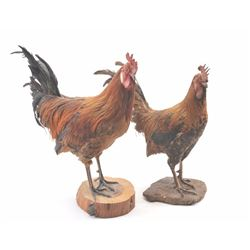 20TMO-1065 PAIR OF ROOSTERS
