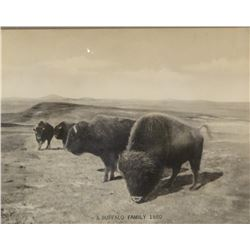 "Huffman, L. A. collotype, A Buffalo Family, 1880, 8"" x 10"", in L. Peterson book, page 253"