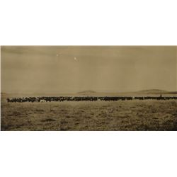 "Huffman, L. A. collotype, Range Cattle, 9 3/4"" x 18 1/2"", framed"