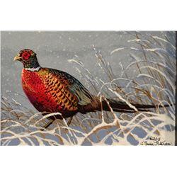 "Pickthorn, Nadine original acrylic, pheasant, 3"" x 5"""