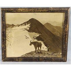 """Hileman, T. J. (1882-1945) Glacier Park vintage photo, 7"""" x 9"""", framed, Kalispell, MT"""